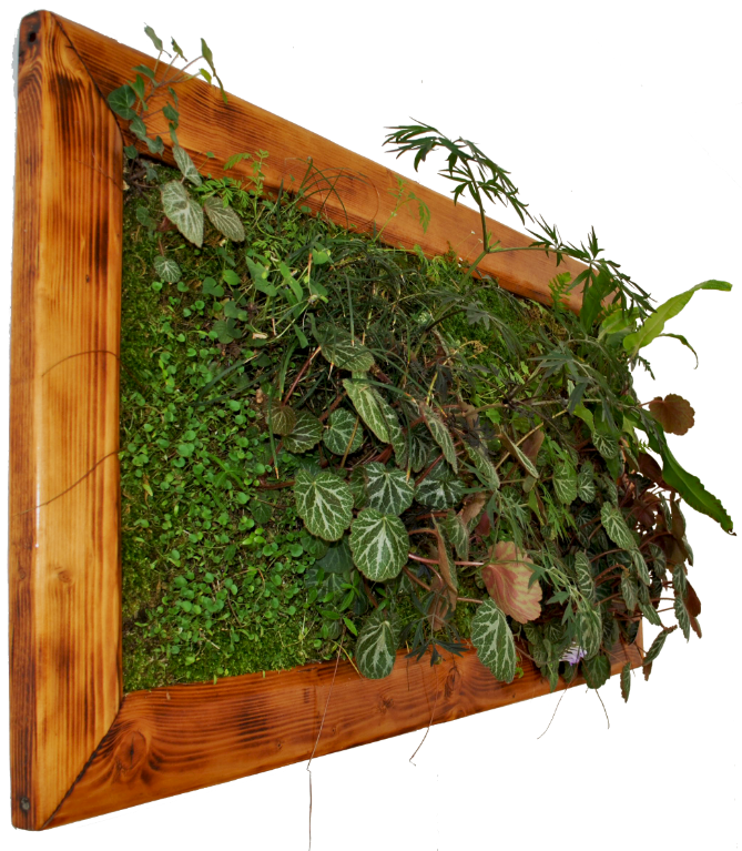 Come-si-coltivano-i-giardini-verticali