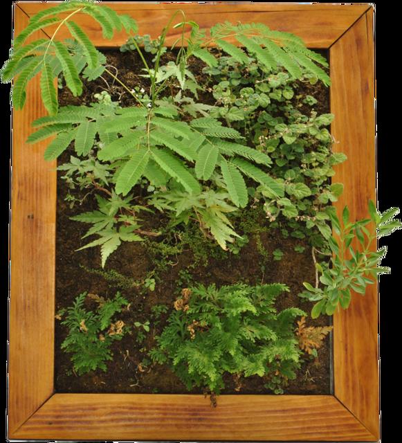 I-benefici-di-un-giardino-verticale-in-casa