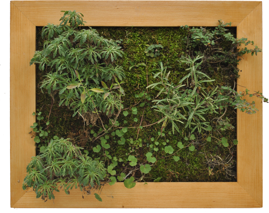 I-vantaggi-dei-giardini-verticali-Life-Panel